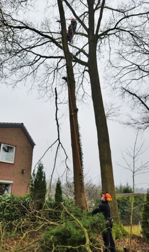 Schütte Holzbau Uelzen-Holdenstedt - Baumfällungen und Baumpflege
